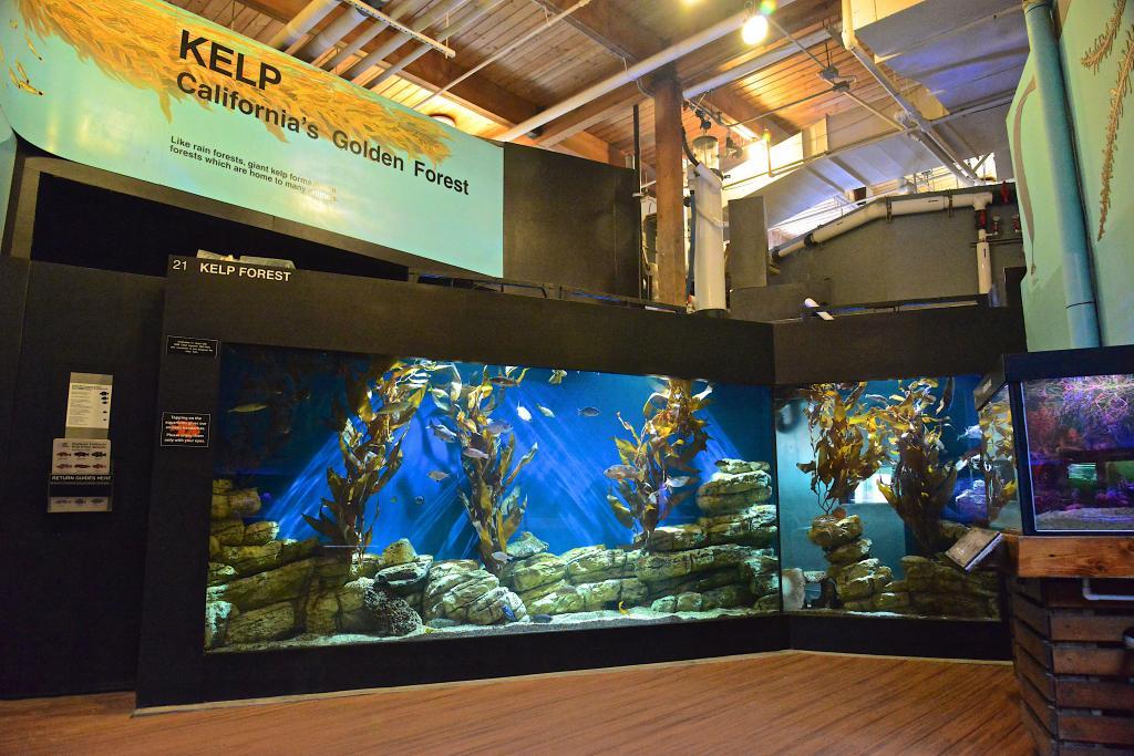 Cabrillo Marine Aquarium City Of Los Angeles Department