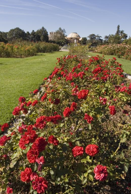 Roses In Garden: EXPO CENTER - EXPOSITION PARK ROSE GARDEN