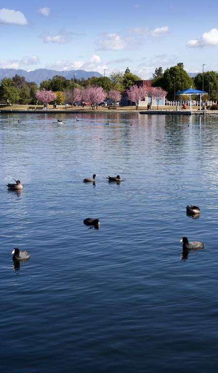 Lake Balboa Anthony C Beilenson Park City Of Los