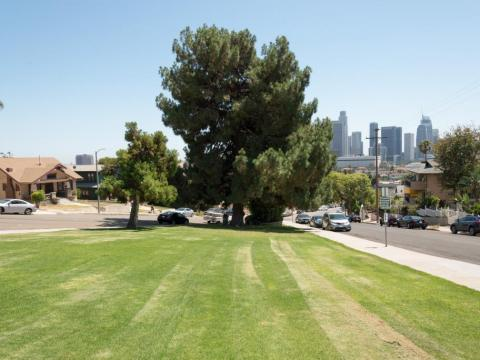 A long strip of grass with a large tree in the middle at the end. The LA skyline is in the background on the right